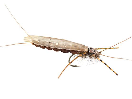 Large Realistic Brown Stonefly